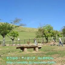 里帰り。新緑の奈良(…