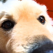 【愛犬のまなざし】