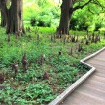 新宿御苑の森