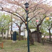 函館公園で桜
