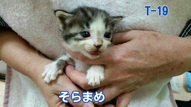 IMG_20160521_231521035.jpg