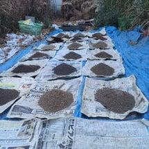 登米市の土壌調査