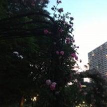 夜のバラ園〜靭公園バ…