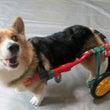 犬の車椅子 犬の車椅…