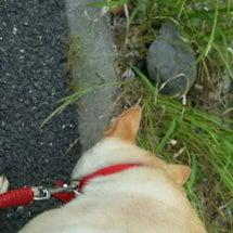 散歩中に亀の産卵に出…