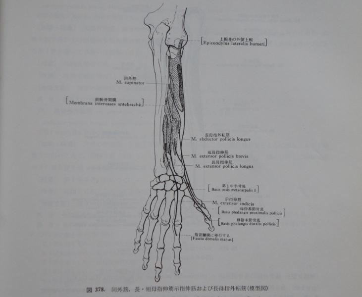 股関節が硬い 徹底究明!中村考宏の超スムーズ股関節回転講座一流のやわらかでふんわりした手になりたい/手内筋(母指球と小指球の筋)コメント