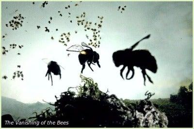 ミツバチの集団