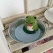 特別講座*カエルの小…