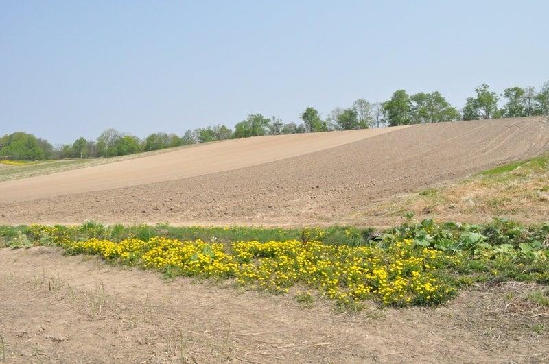 アスパラ農場