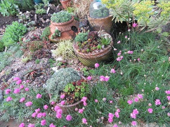 庭づくり201605-10