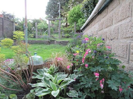 庭づくり201605-9