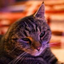 猫の耳炎の原因
