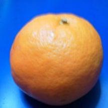 オレンジピールを作り…