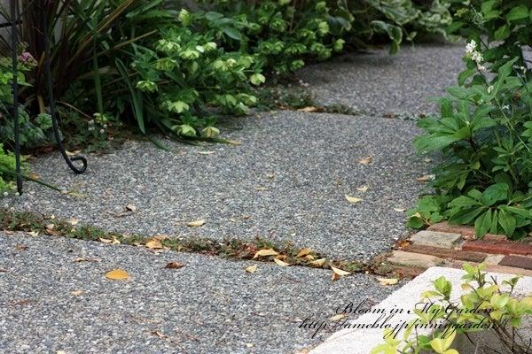 通路の落ち葉