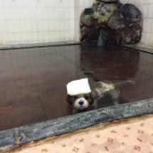 マッキーの入浴シーン