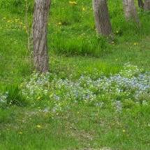 小さな山野草たち