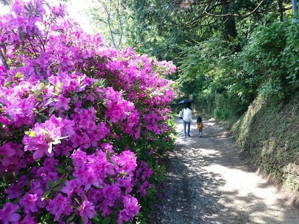 ビストロ・ラ・ペクニコヴァ、樹ガーデン