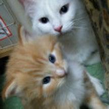 僕の子孫たち。猫ブー…