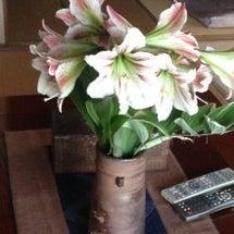 癒しの花々〜♪♪