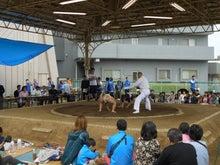 0515わんぱく相撲
