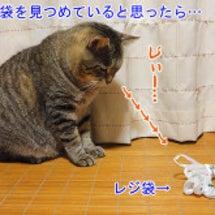 レジ袋で遊ぶ猫を見て…