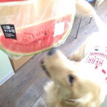 植木の愛犬ティキさん…