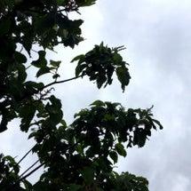 雨上がり後の…