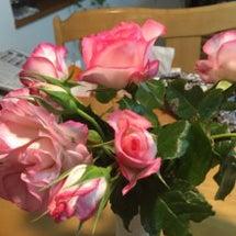 大好きな薔薇の季節