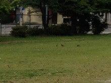 鳥たちの朝