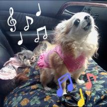let's sing…