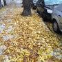 すっかり、、、秋、か…