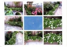 月見草写真3