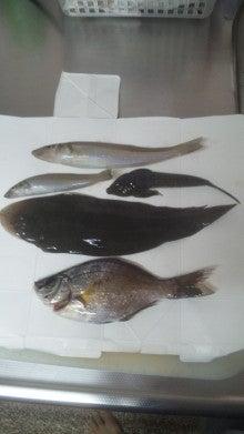 160529_江の島の釣果