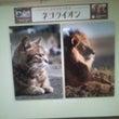 日本橋三越本店のネコ…
