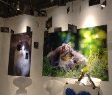 ☆野良猫写真展