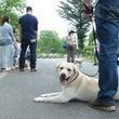 犬のお散歩コミュニテ…