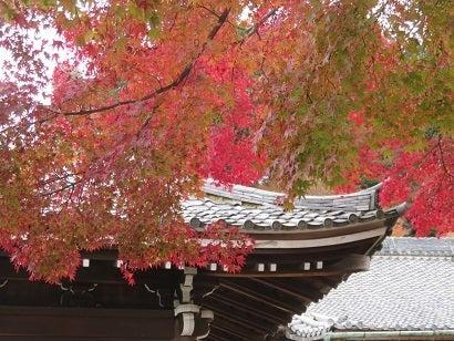 釈迦堂と紅葉