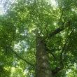 命あふれるブナの森