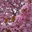 春の思い出
