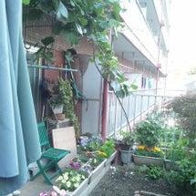 キウイの栽培(`・c…
