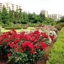 新宿御苑へお散歩〜♪