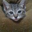 子猫ラインナップ③