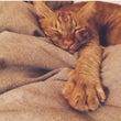 6月❁ おやすみの…