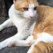 猫日和~(=^・ω・…