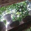 隠れ家ハーブの庭