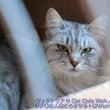 子猫ラインナップ④