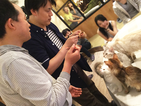knit-guys cat cafe knitting