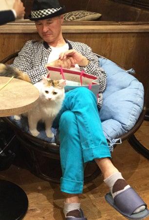 knit-guys cat cafe knitting