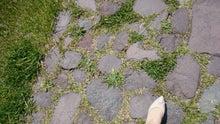 入道崎の石畳
