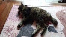 立体猫マット